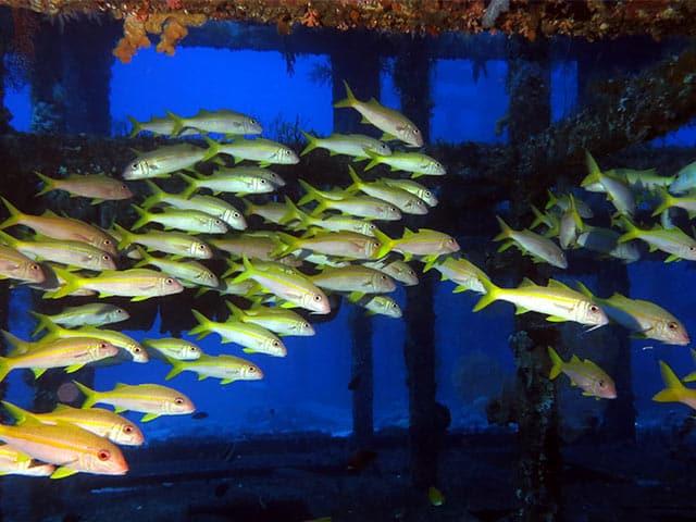 2018-greenisland-images-鋼鐵礁