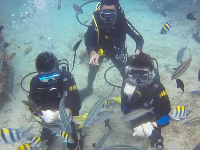 customed-TSD11 標準化體驗潛水