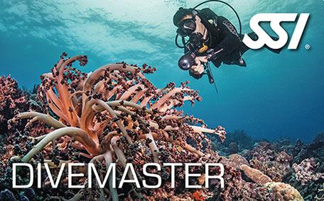 dive-leader-DM SSI潛水領導級