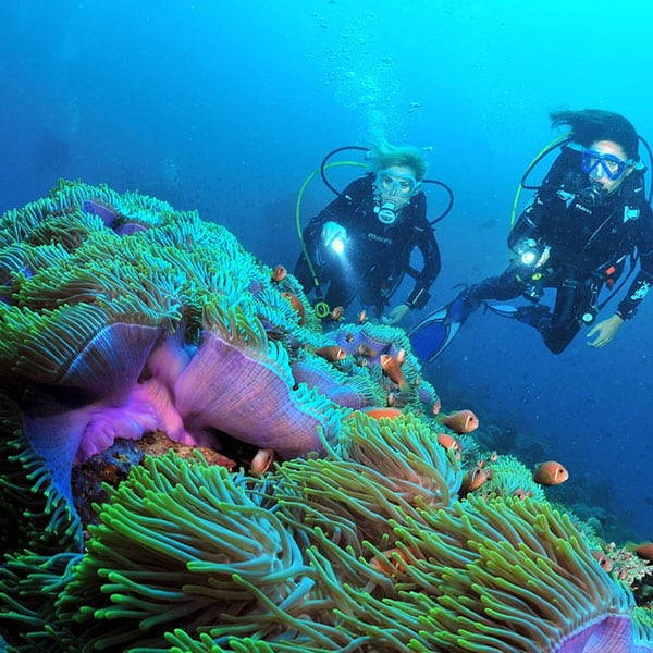 潛水課程-潛水導遊