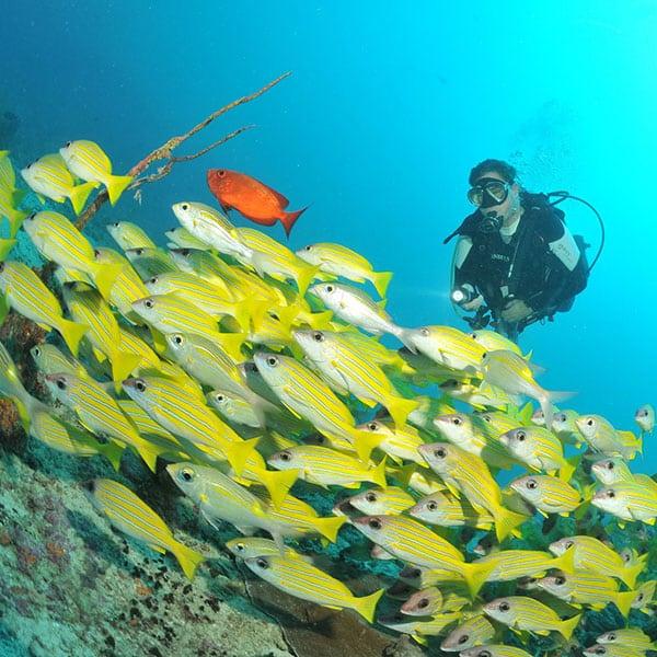 潛水課程-高氧潛水