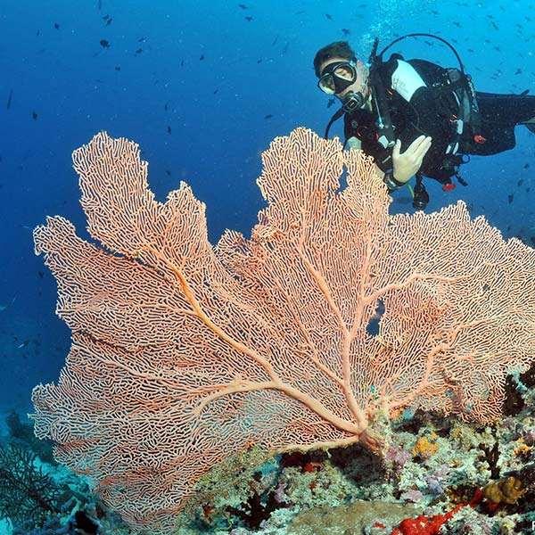 國外潛水旅遊